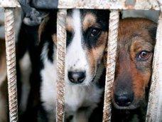 Депутаты Крыма предлагают ужесточить наказание за жестокость к животным