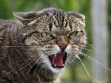 За зиму феодосийцев покусали две бешеные домашние кошки