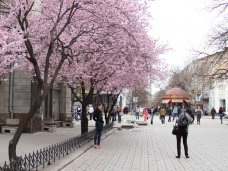 Цветущие деревья в Симферополе стали фотообъектом для прохожих