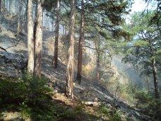 Пожар, В Крыму сохраняется чрезвычайная пожароопасность