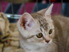 В Севастополе прошла международная выставка кошек