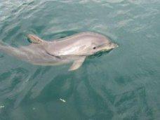 Дельфины, В Крыму спасли двух маленьких дельфинов
