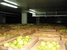 В Крыму будут строить хранилища фруктов и овощей