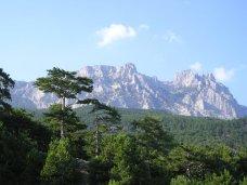 Крымские леса за полгода принесли в бюджет 1,5 млн. грн.