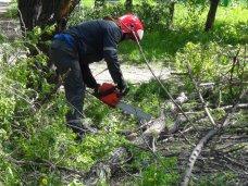 В Симферополе сносу подлежат более тысячи деревьев
