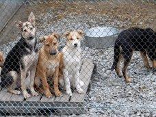 В Ялте до конца года появится приют для беспризорных животных