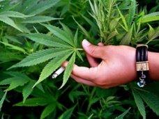 Наркотики, Житель Николаевки выращивал на огороде коноплю