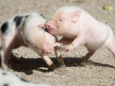 зоопарк, В Крыму откроется зоопарк ручных животных