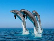 Дельфины, В Крыму спасли прибившегося к берегу дельфина