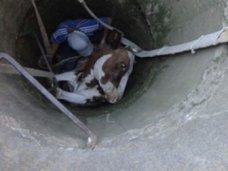 Происшествие, В Крыму из колодца вытаскивали корову