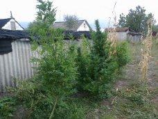 Наркотики, В Кировском районе выявили пять фактов хранения наркотиков