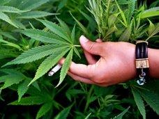 Наркотики, Житель Сак получит три года за выращивание конопли