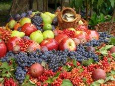 Фрукты, В Крыму собрано около 30 тыс. тонн винограда и фруктов