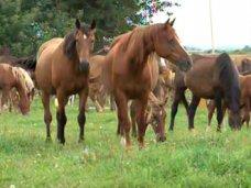 конный пробег, В Феодосии отметят День коневода