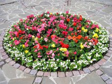 Благоустройство, В Ялте посадили почти 87 тыс. цветов