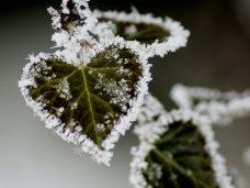 Погода, На выходных в Крыму обещают заморозки