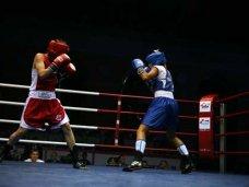 бокс, В Ялте проходит Международный турнир по боксу