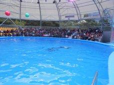 Дельфинарий, В Алуште открылся Центр дельфинотерапии