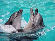 Дельфинарий, Дельфинарий в Алуште не оставит город без воды, – мэр