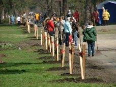 Озеленение, Территорию возле Алушты озеленят молодыми деревьями