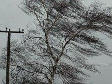 Ветер оборвал электросети в 16 населенных пунктах Крыма