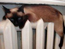 Отопительный сезон, Дома Симферополя сегодня получат тепло