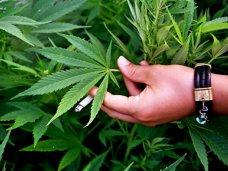 Наркотики, В Бахчисарае задержали торговца марихуаной