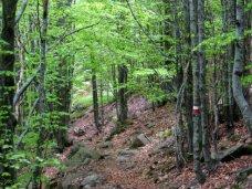 Лес, В Крыму создадут реестр лесных участков