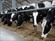 Животноводство, В Крыму на один совхоз-завод стало меньше
