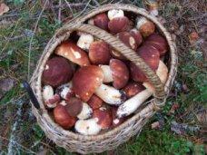 Отравление, Две жительницы Бахчисарая отравились грибами