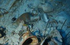 центр подводных исследований, Черноморский центр подводной археологии получил ценные артефакты