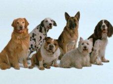 выставка собак, В Керчи пройдет всеукраинская выставка собак