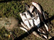 Браконьерство, В Сакском районе незаконно выловили пиленгаса и кефаль