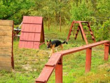 животные, В Симферополе планируют создать площадку для дрессировки собак