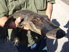 Фотографы с животными, У фотографа-живодера в Сакском районе отобрали крокодила