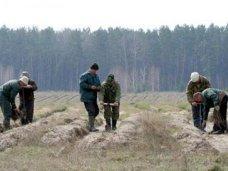Лес, Осенью в Крыму высадят 900 га леса
