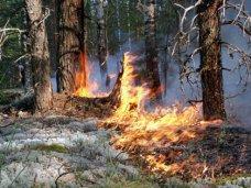 Пожар, В Крыму исторический минимум по числу лесных пожаров