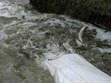 Рыба, В Крыму выпустили рыбу в два самых крупных водохранилища
