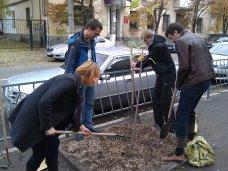 Деревья, В центре Симферополя высадили саженцы платана