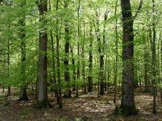 Лес, В Алуште незаконно распорядились 7 га леса