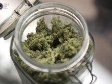 Наркотики, Пенсионерка из Красноперекопска пойдет под суд за хранение конопли