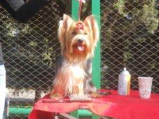 выставка собак, В Алуште провели выставку собак
