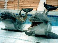 Дельфинарий, Дельфинарий в Алуште лишился животных