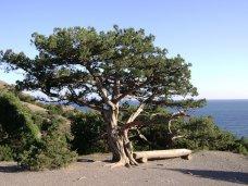 Деревья, В Крыму предложили сделать заповедными 46 уникальных деревьев