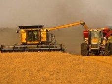 В Крыму собрали 842 тыс. тонн зерновых и масличных культур