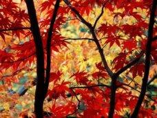 Золотая осень, Под Феодосией пройдет праздник «Золотая осень»