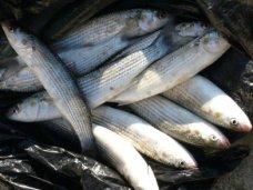 Браконьерство, На озере Сасык-Сиваш поймали браконьера