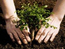 Высадка деревьев, Могилев призвал крымчан присоединиться к акции по посадке деревьев
