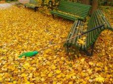 сжигание листвы, Крымчан призвали не сжигать опавшие листья