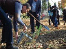 Высадка деревьев, В Алуште высадили новые деревья